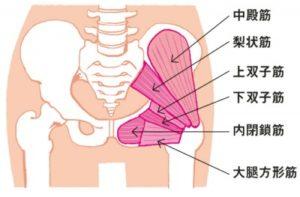 お尻の筋肉の説明